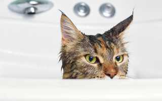Когда можно купать кота после кастрации