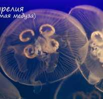 Как называется скопление нервных клеток у медуз