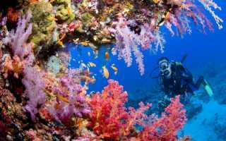 Какие животные водятся в Индийском океане