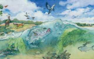 Можно ли назвать биосферу экосистемой