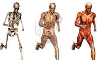 Что обеспечивают органические вещества костям