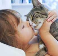 Как кошки лечат