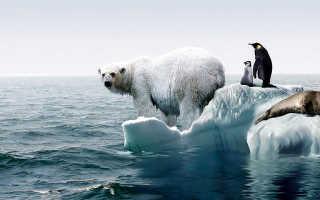 В чём суть глобального потепления