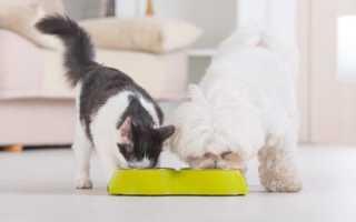 Можно ли дать педигри коту