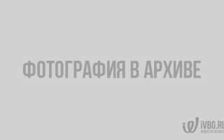 Как проходят выборы