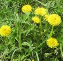 Каких цветов бывает трава