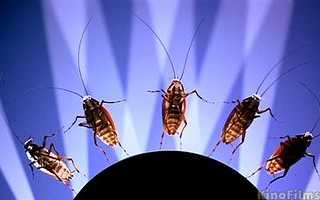 Является ли грехом убийство насекомых