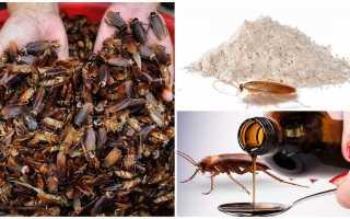 Какие лечебные тараканы