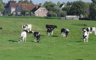 Чем знамениты Нидерланды