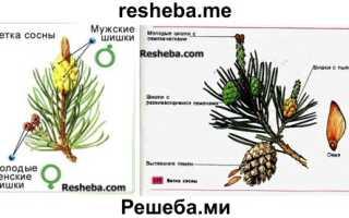 В чем преимущества семян перед спорами