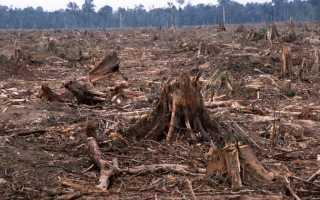 Чем вредна вырубка лесов