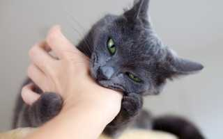 Можно ли заразиться бешенством от царапины кошки