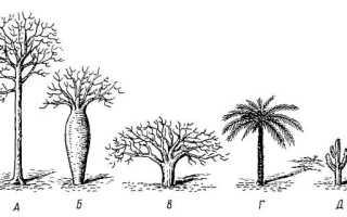 Какие жизненные формы встречаются у растений