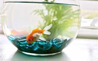 Какая рыбка может жить одна в аквариуме