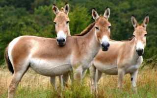 Какие животные в Сомали