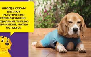В каком возрасте стерилизуют собак